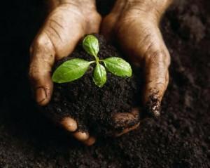 Seed of Gratitude